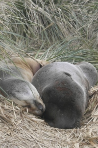 Sleeping seals, stumbled upon.