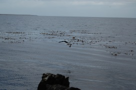 A gull also benefits from the local resource; the squid!
