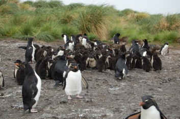 This time of year the adults can leave the chicks in creches and head out to see