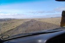 Traffic on Tex's coastal track