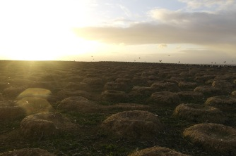 The sun sets over the nests from the previous years