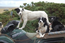 The dogs in their habitat; aboard a quad