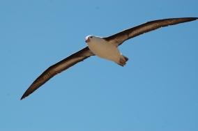 Wingspan!