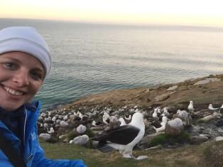 Albatross selfie
