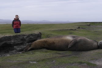 Han putting these juvenile seals to scale