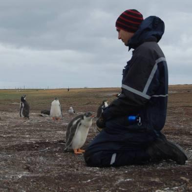 Penguins: Standard