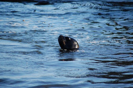 This female sea lion was enjoying the shallows