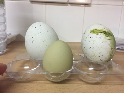 They don't quite match our hens' eggs.