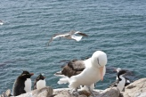 How many sea birds can you fit in one picture?