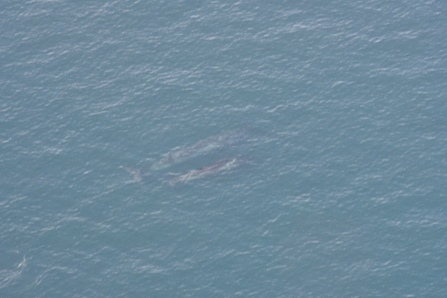 This mother and calf whale gave us a fine journey