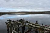 Rock shags/cormorants use the jetty now