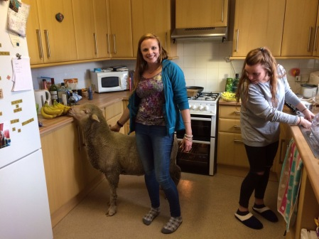 our pet sheep, in the kitchen