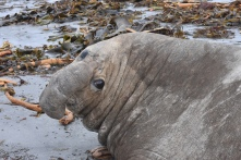 I don't know why they're called elephant seals