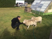 Ellie meeting the Port Howard school's pet sheep