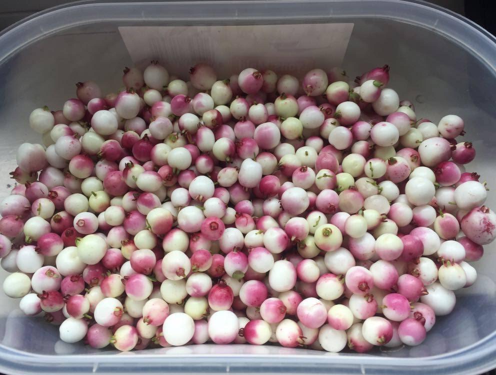 Teaberries 25-03-20